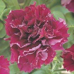 Семена цветов почтой недорого